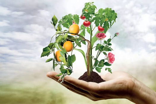 Importance Of Horticulture Research